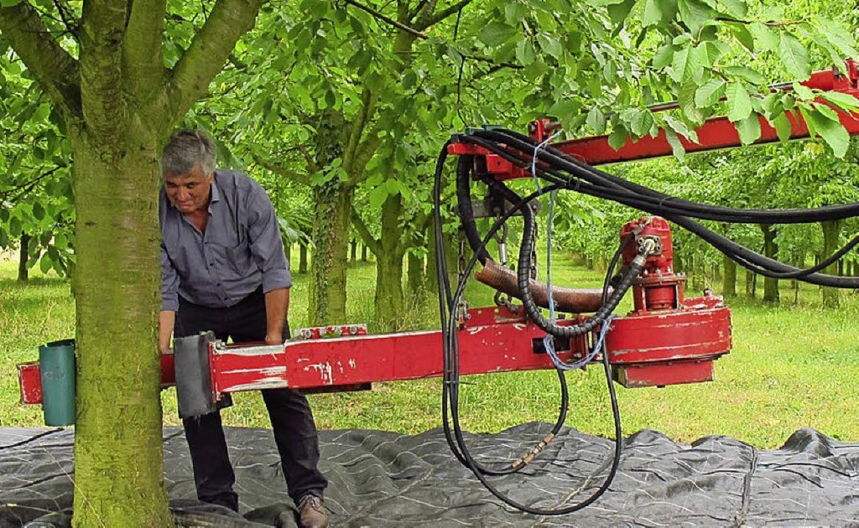 Gerd Bahlinger zeigt den Rundfahrt-Teilnehmen, wie ein Kirschrüttler arbeitet.  | Foto: Jutta Schütz
