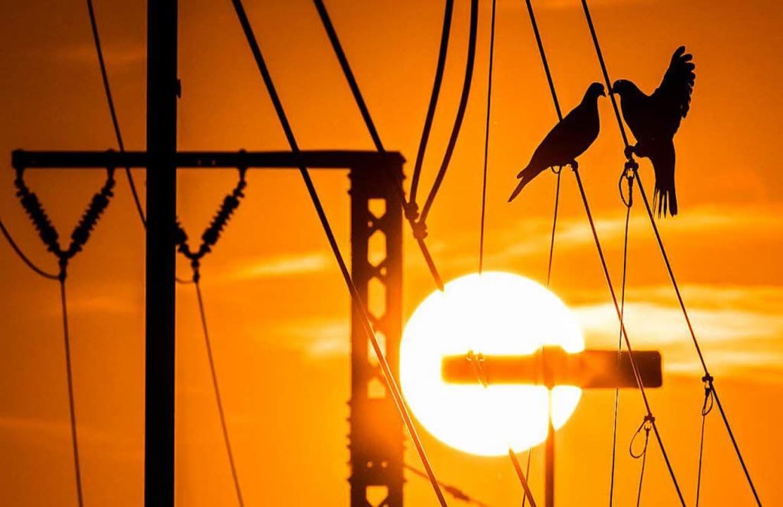 Warum bekommen Vögel auf Stromleitungen keinen Schlag?  | Foto: Mohssen Assanimoghaddam