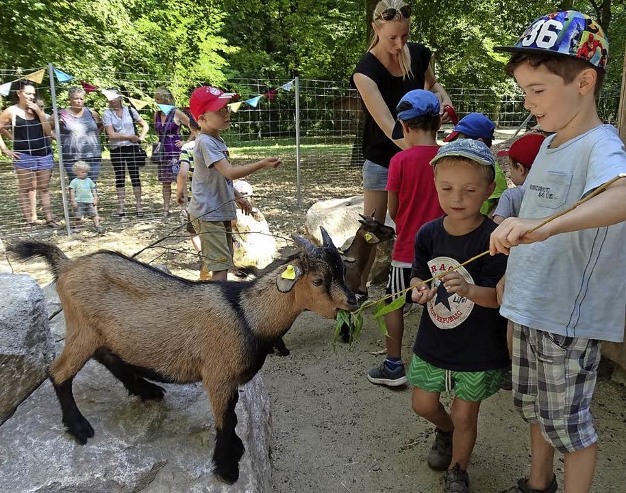 Die Ziegen vom Mundenhof kommen gut bei den Kindern an.   | Foto: Roser