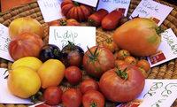 Tomatenfest vor dem Stadttheater