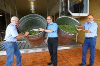 Badischer Winzerkeller verarbeitet die ersten 200000 Kilogramm Trauben für Neuen Süßen