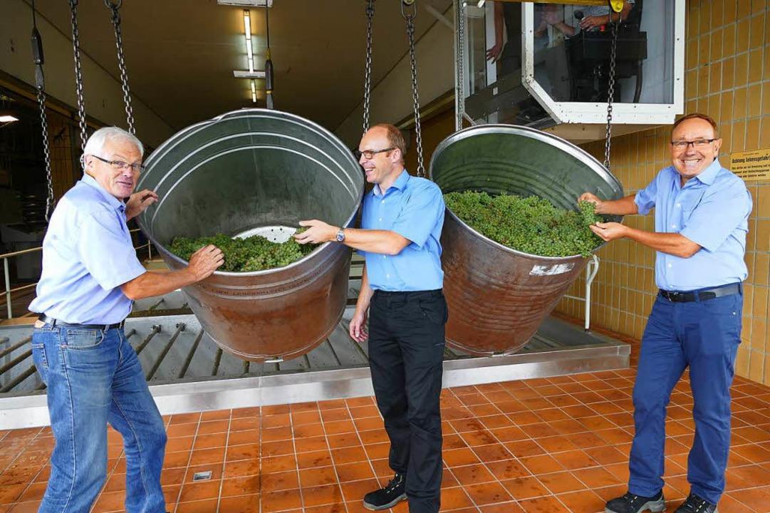 Beim Badischen Winzerkeller wurden am ...r Qualität der Trauben sehr zufrieden.  | Foto: Gerold Zink