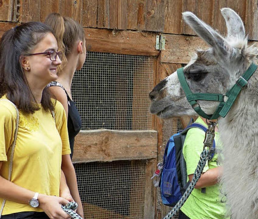 Augenkontakt als erste Begegnung zwischen Tier und Mensch  | Foto: CLaudia Bachmann-Goronzy