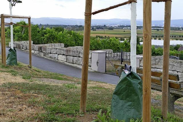 Wassersäcke für Bäume