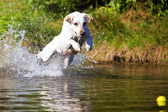 Badende Hunde sorgen für Stress im Nonnenmattweiher