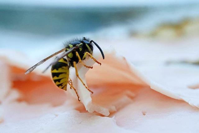 Darum gibt es einen Lieferengpass bei Medikamenten für Wespen-Allergiker
