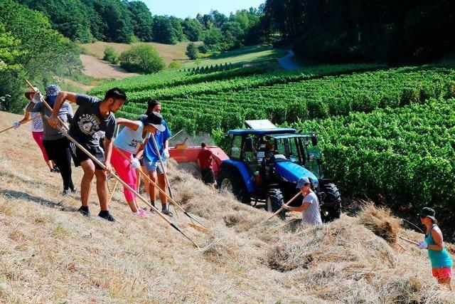 Junge Menschen aus verschiedenen Ländern engagieren sich beim SCI-Camp am Kaiserstuhl für die Natur