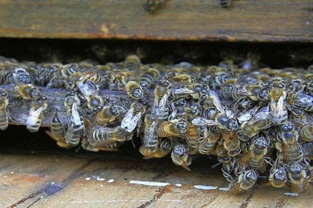 Von der Biene zum Honig