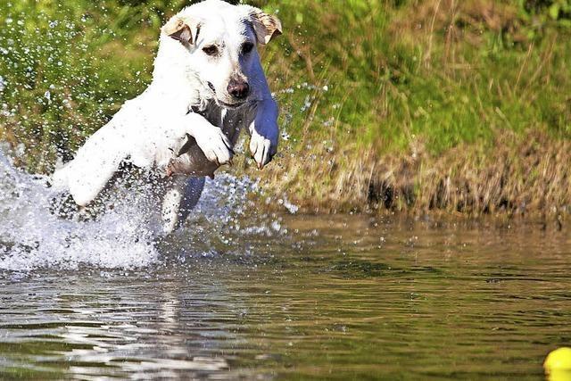 Zoff im Netz über Hunde im Weiher
