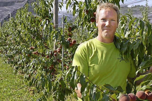 Die Obstbauern aufd em Rührberg sind mit dem Sommer sehr zufrieden