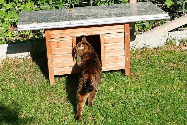 Neuer Standort soll den Streit um die Katzenfutterstation in Mappach beilegen