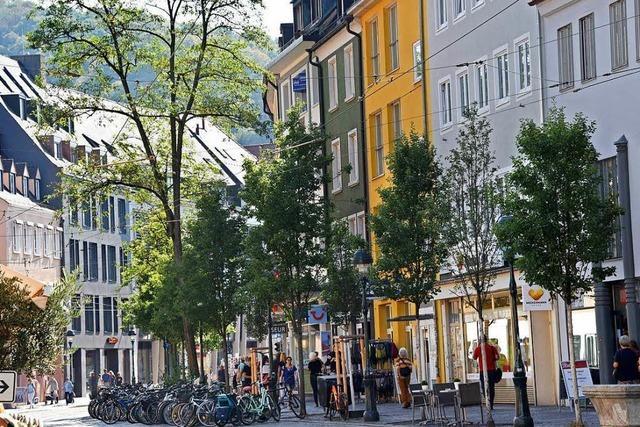 Amt will alle 14 Robinien an der Freiburger Bertoldstraße fällen lassen