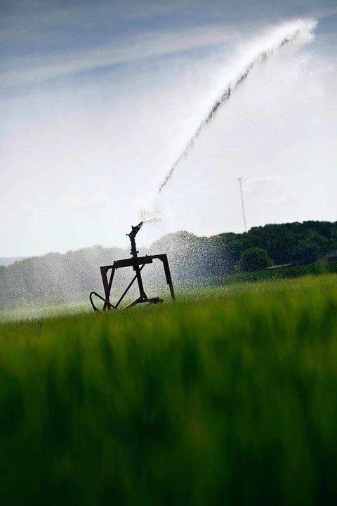 Die Polizei geht davon aus, dass sich ...nik der Bewässerungsanlagen auskennen.    Foto: Frank Rumpenhorst