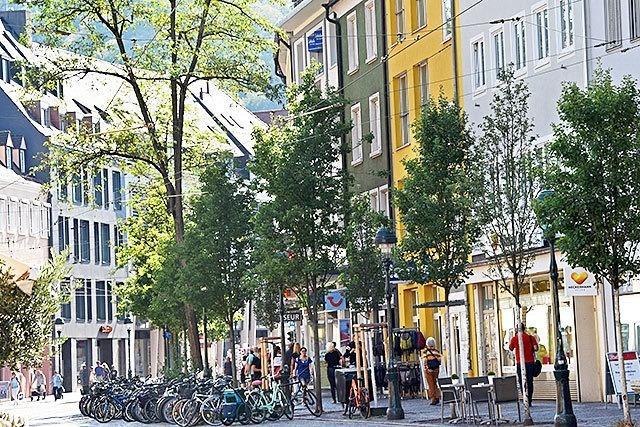 Amt will alle 14 Robinien an der Bertoldstraße fällen lassen