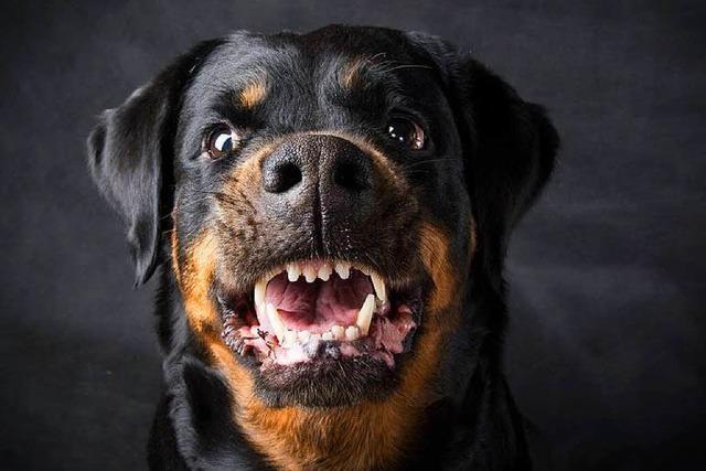 Hunde versperren Weg zu totem Herrchen in Wohnung bei Heidelberg