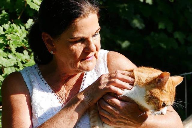 Im Landkreis Lörrach gibt es immer mehr verwilderte Katzen