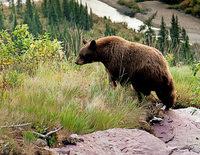 Galcier Nationalpark in Montana