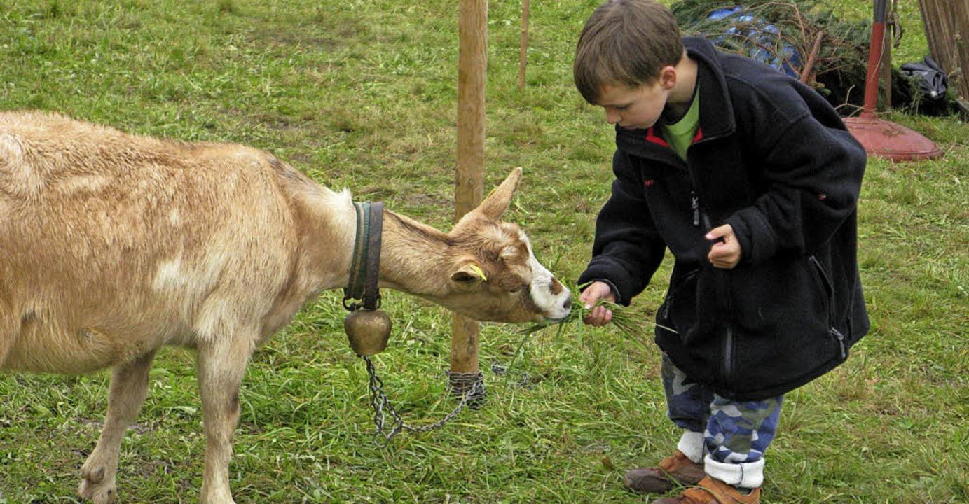 Wie beim ersten Biosphärenfest im verg...egenheit geben, Ziegen zu streicheln.   | Foto: Archivbild: sub