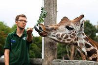 Sind Tiere im Zoo glücklich?
