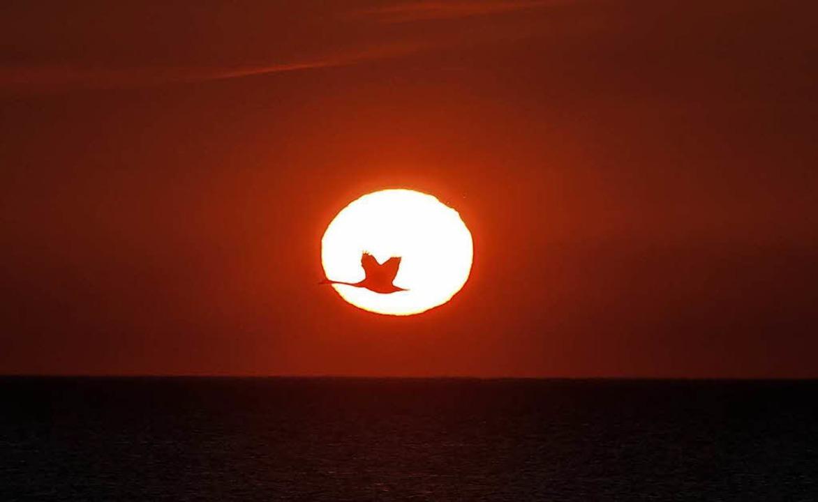 Ein Schwan fliegt bei Sonnenaufgang in...land, Großbritannien, durch die Sonne.  | Foto: dpa