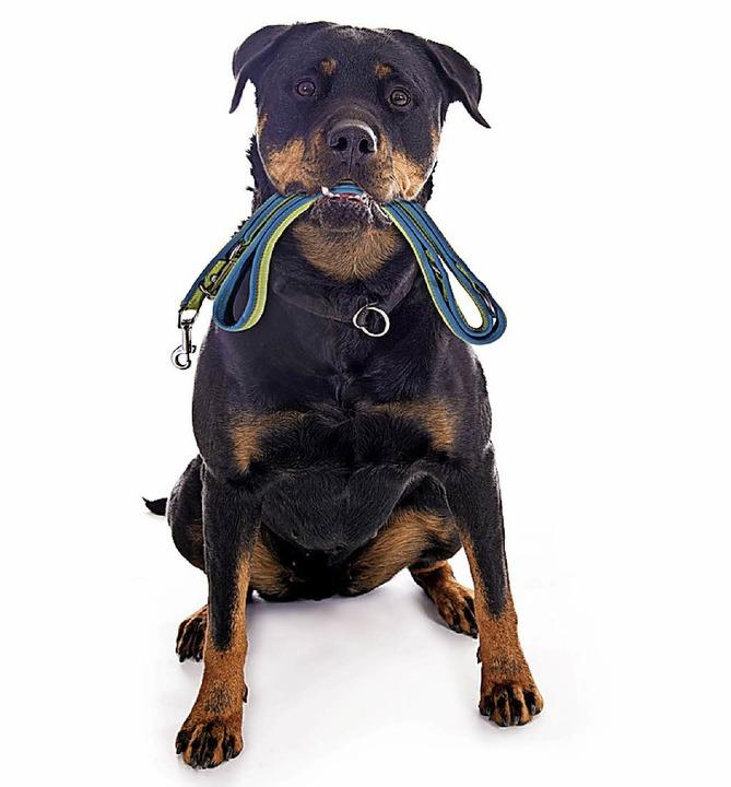 Hunde müssen  in den meisten Gemeinden   an die Leine.   | Foto: stock.adobe/grafikplusfoto