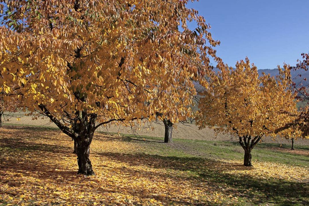Wunderbare  Herbststimmung im Eggenertal  | Foto: André Fuchs