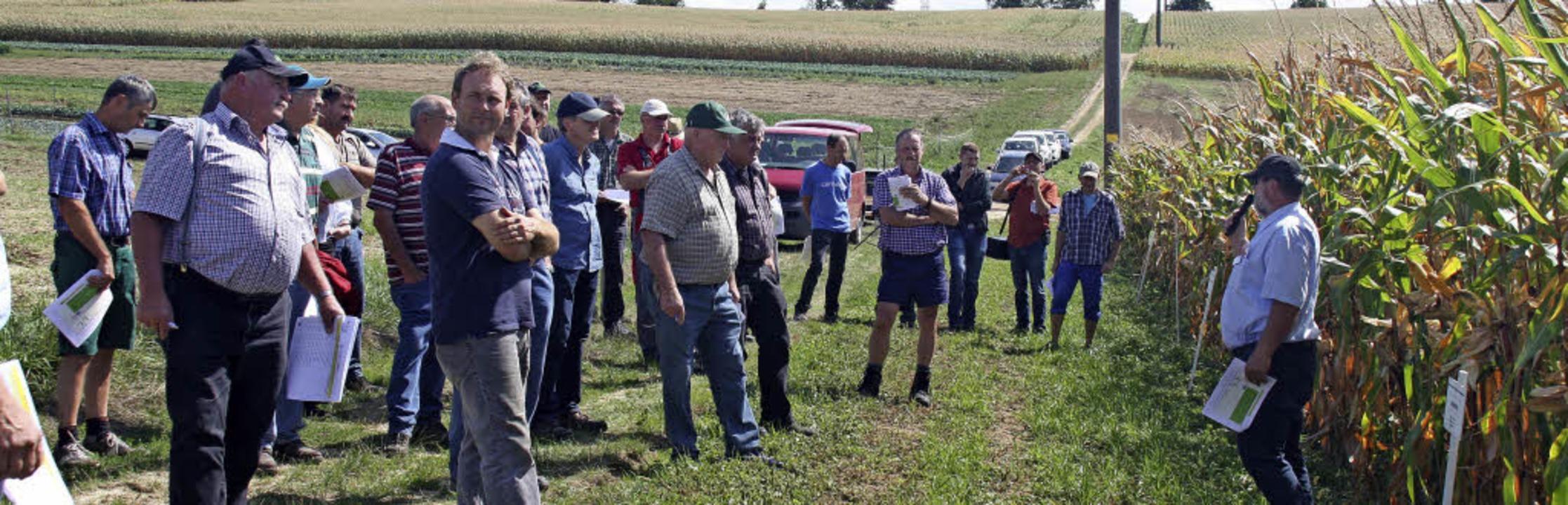 Groß war das Interesse am Feldtag beim...n auch neu gezüchtete Maissorten vor.   | Foto: Siemann