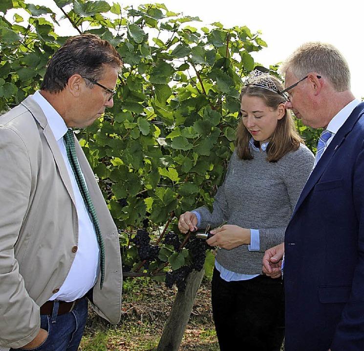 Peter Hauk,  Bürgermeister Christian R...Miriam Kaltenbach prüfen die  Trauben.  | Foto: Schöneberg