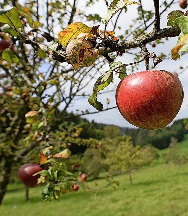 Äpfel von Ettenheimer Streuobstwiesen werden am Samstag im Bauhof angenommen.  | Foto: Dpa