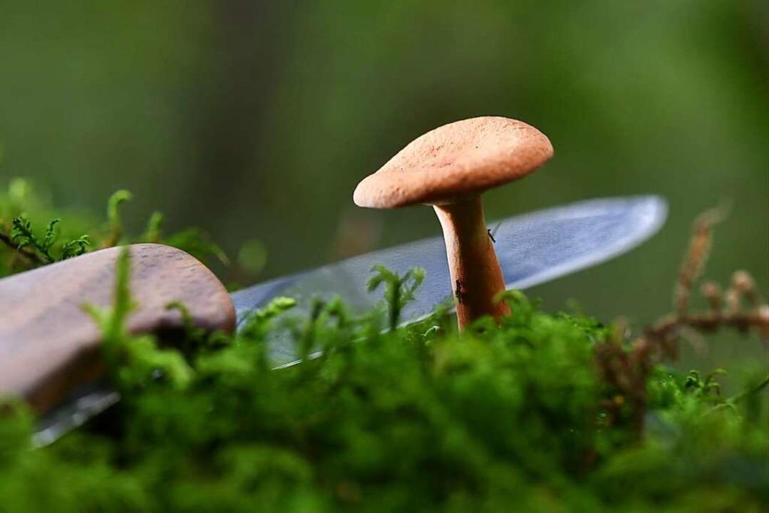 Pilze gibt es in dieser Saison nur wenige.  | Foto: dpa