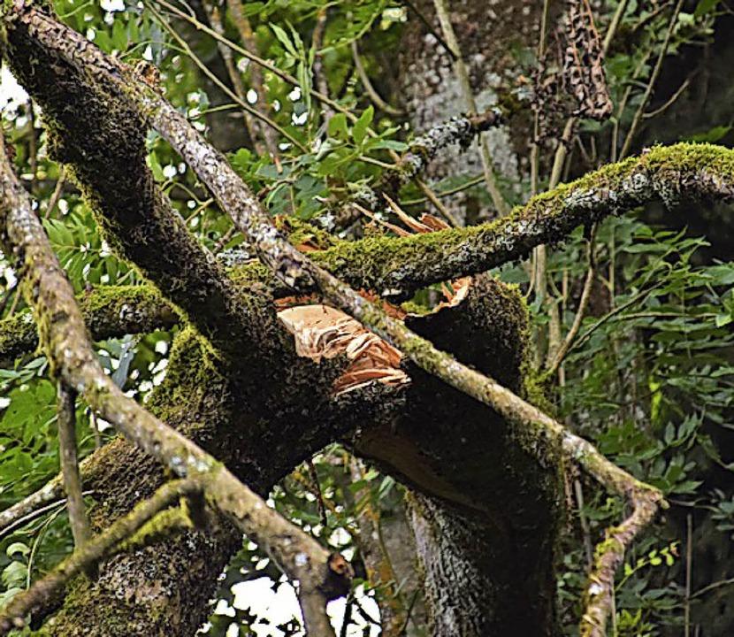 Sturmschäden haben 2018 den Holzpreis gedrückt.    Foto: Stefan Ammann