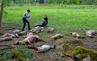 In Wildbad tanzt keiner mit dem Wolf