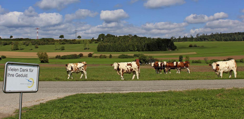 Ob die Kühe auf der Weide neben dem Se... beneidenswerter Geduld das Geschehen.  | Foto: Christa Maier