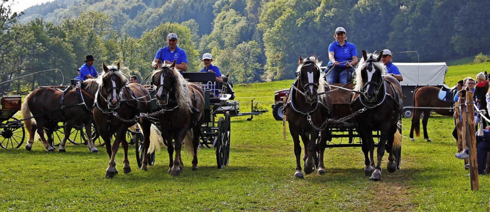 Der Reit- und Fahrverein Oberes Elztal... findet das Reit- und Fahrfest statt.   | Foto: Verein