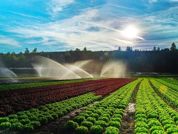 Regen für die Felder (Eichstetten)