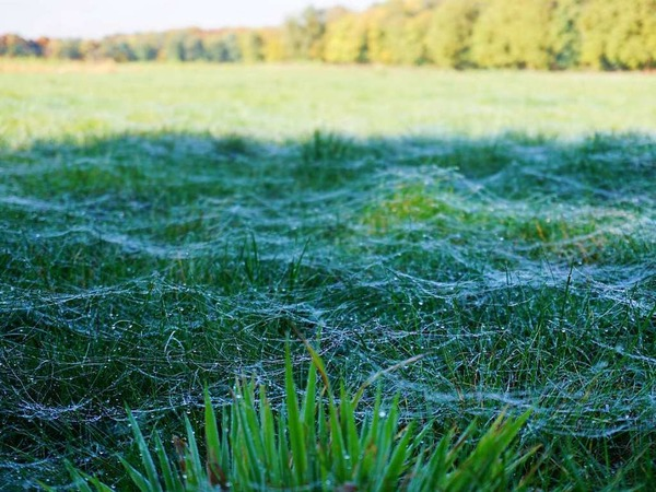 Natürliche Netzwerke (Matschelsee, Kürzell)