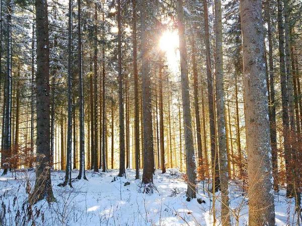 Winterwald (zwischen Titisee und Hinterzarten)