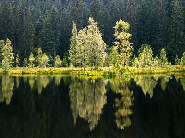 Spiegelungen im See (Buhlbachsee)