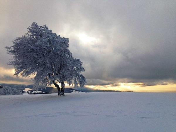 Winter, Wind und Wetterbuche (Schauinsland)