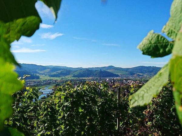 Abtsberger Wein (Gengenbach)