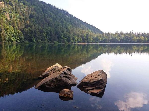 Sommermorgen am Feldsee