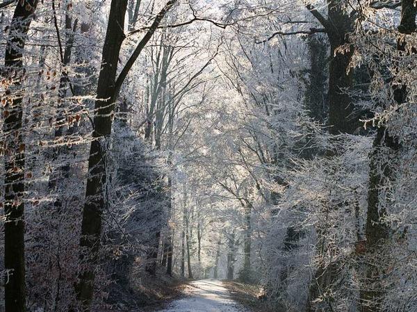 Winterspaziergang (Gundelfingen)