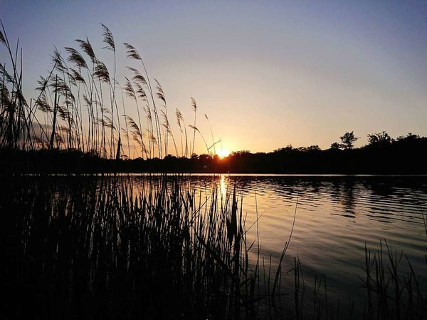 Abendlicht (Opfinger See)