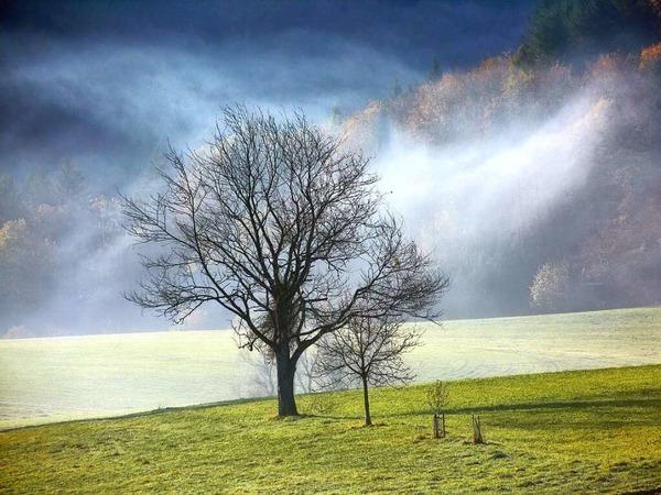 Nebelfelder (bei Weitenau)