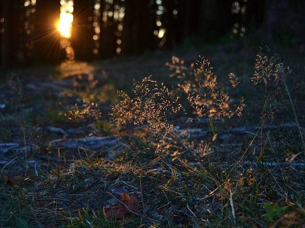 Morgensonne erweckt die Natur (Kapf, Oberprechtal)