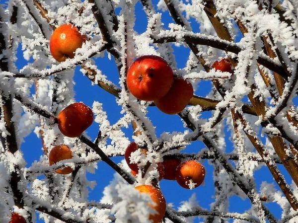 Vergessene Früchte (Kirchhofen)
