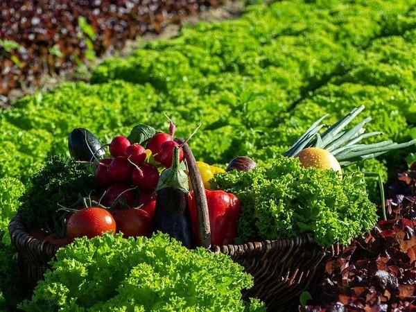 Gemüse frisch vom Feld (Eichstetten)