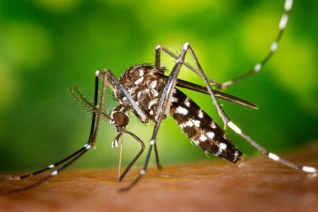 Woher kommen die Tigermücken?  | Foto: dpa