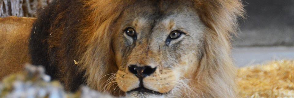 Ein Tag im Wild- und Raubtierpark Tatzmania