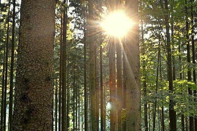 Der Wald kam mit blauem Auge davon